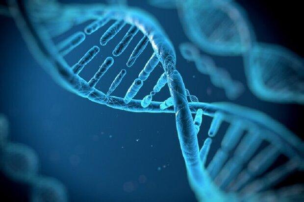 ژنها چه نقشی در تأثیرگذاری داروهای کرونا بازی می نمایند