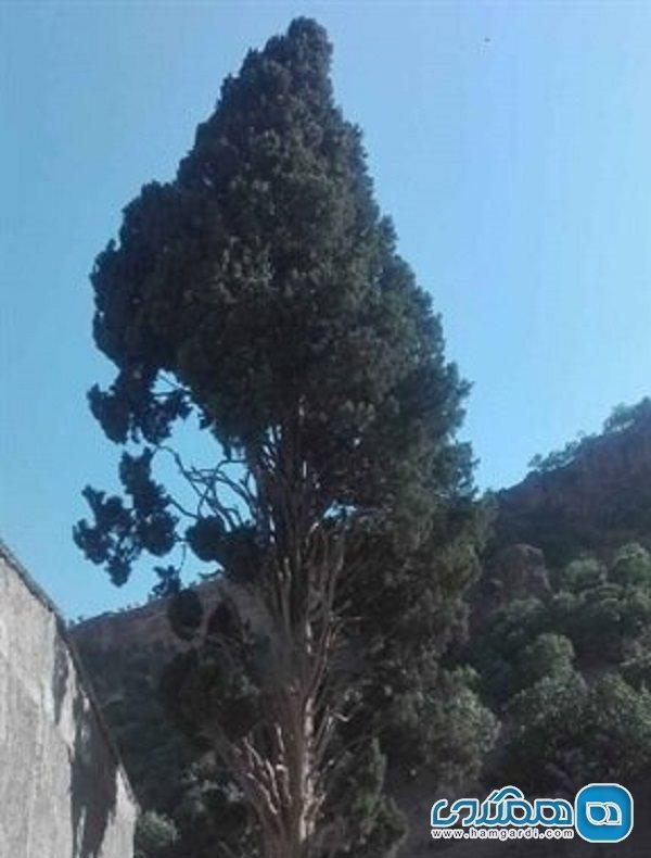 اعلام ثبت درخت افسانه ای در فهرست آثار ملی